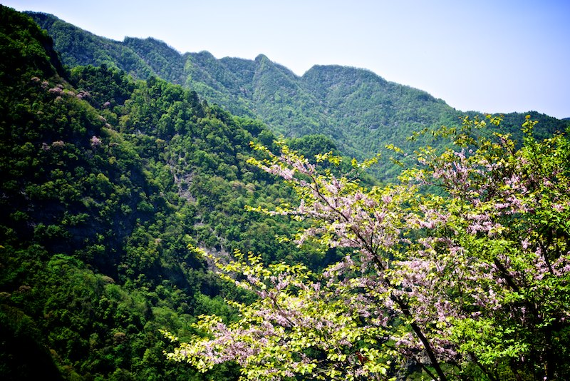 Wudang Mountains in blossom
